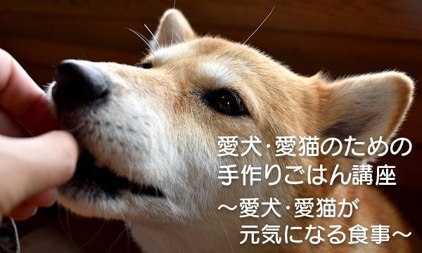 ペット食育上級指導士・鈴木美由起の犬・猫の手作りごはんWEBセミナー/ペット食育・入門講座イベント