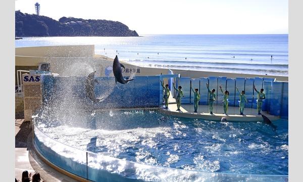 新江ノ島水族館 入場券 学割キャンペーン ※学生証等の提示必要 イベント画像2