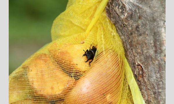 飼育係と虫捕りしよう「ワナに集まる虫たち」 イベント画像1