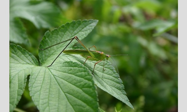 飼育係と虫捕りしよう「秋の鳴く虫を捕まえよう」 イベント画像1