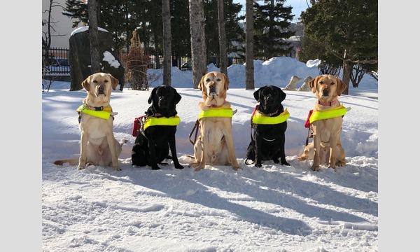 盲導犬として活躍するまでを担う盲導犬歩行指導員のお仕事盲導犬とユーザーさんとの2人三脚の生活について イベント画像2