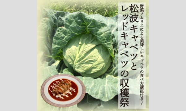 松波キャベツとレッドキャベツの収穫祭 イベント画像1
