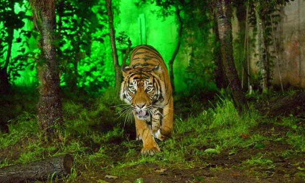 【8月20日(金)開催分】八木山動物公園フジサキの杜「ナイトズージアム2021(夜間開園)」 イベント画像1