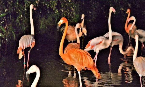 【8月20日(金)開催分】八木山動物公園フジサキの杜「ナイトズージアム2021(夜間開園)」 イベント画像2