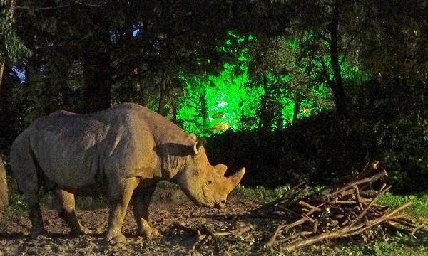 【8月22(日)開催分】八木山動物公園フジサキの杜「ナイトズージアム2021(夜間開園)」