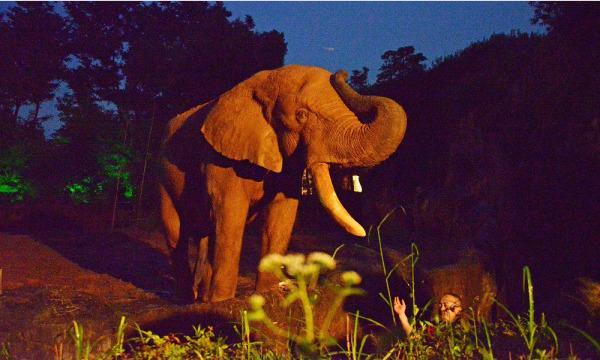 【8月21(土)開催分】八木山動物公園フジサキの杜「ナイトズージアム2021(夜間開園)」 イベント画像1