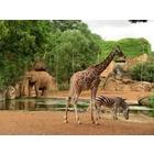 八木山動物公園フジサキの杜のイベント