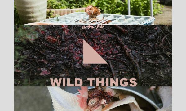 ルサンチカ『WILD THINGS』横浜公演 イベント画像1