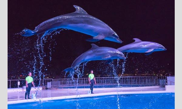 夜の水族館で素敵な出会いを!マリンワールド街コン50対50 イベント画像2