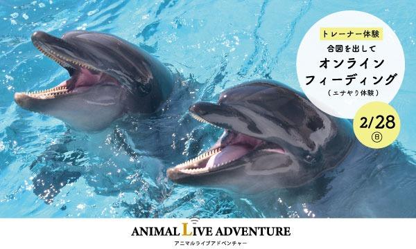 【2/28(日)】アドベンチャーワールド イルカを間近で観察!ドルフィンフィーディング イベント画像1