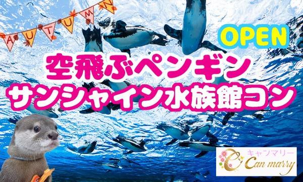 【11/19(日)】OPEN人気のカワウソやまと君と話題のペンギンが空を飛ぶ!水族館デートコンサンシャイン【池 in東京イベント