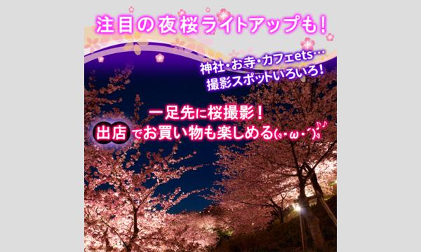 松戸河津桜フェス イベント画像2