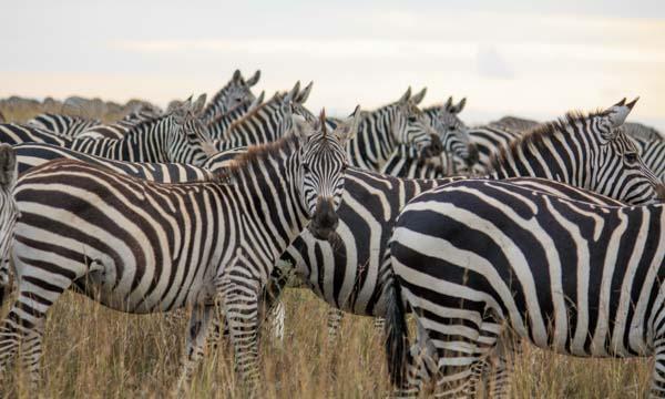 6/13&6/26【ケニアから生中継】サバンナの動物や風景がご自宅に!おうちサファリINナイロビ国立公園 イベント画像2