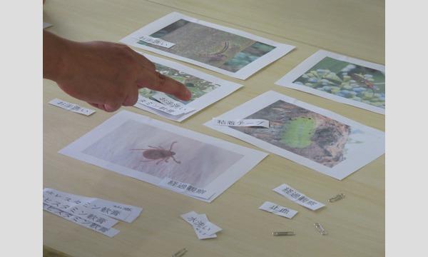 危険生物オンラインセミナー ~様々な生き物による『受傷の種類』と『応急処置』 イベント画像2